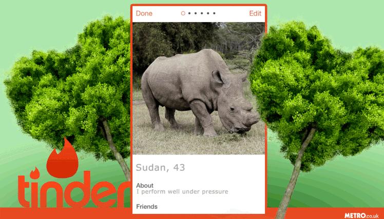 mg_tinder_rhino_phone02
