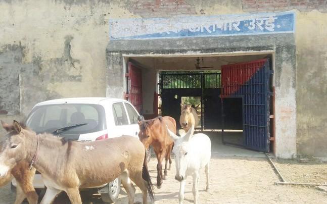 donkey-ani-story-647_112717070050