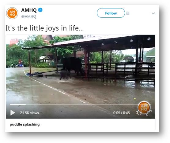 Baby elephant splashing in puddles Credit: @AMHQ
