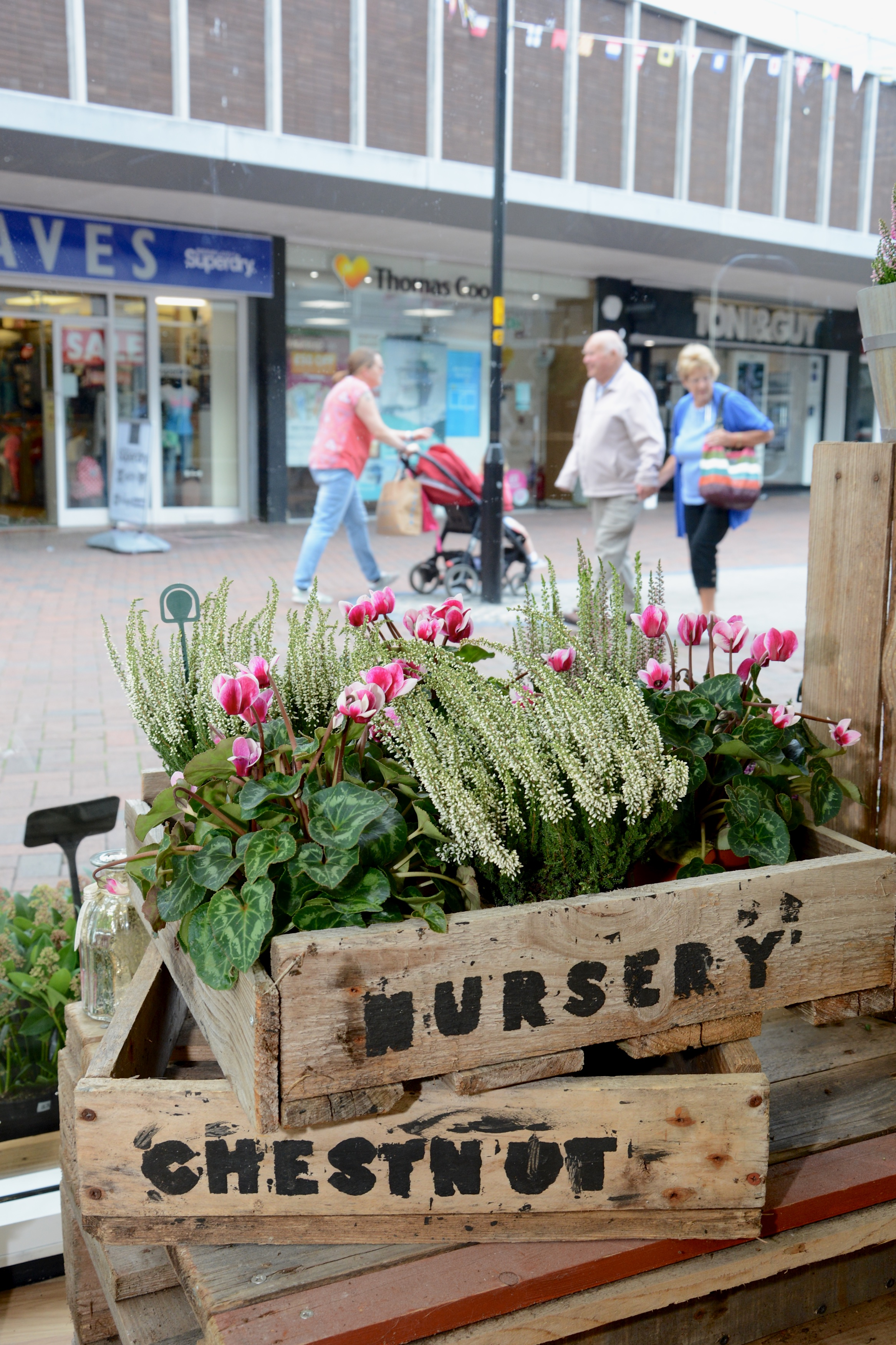 Chestnut Nursery opens pop-up shop at the Dolphin Shopping Centre